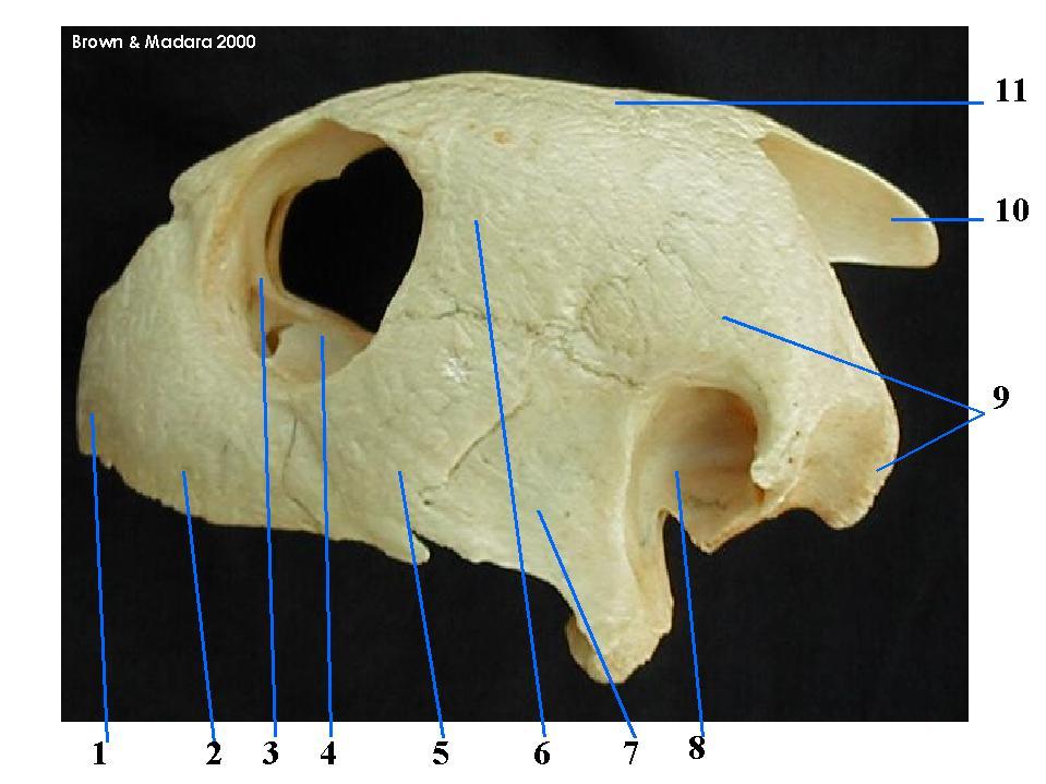 Skull of the Sea Turtle