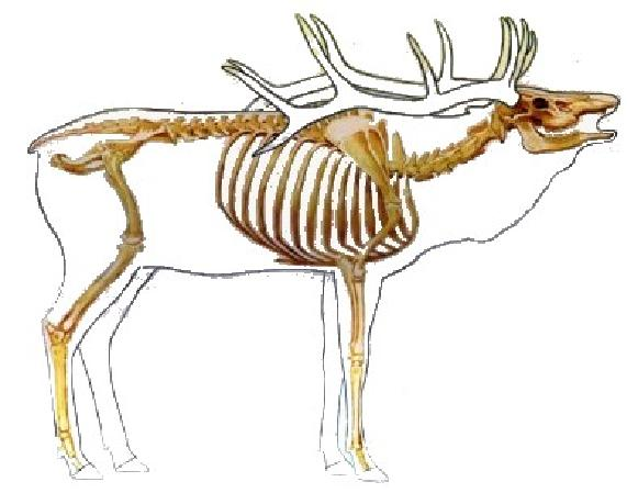 Moose Anatomy Diagram http://www.pic2fly.com/Moose+Anatomy.html